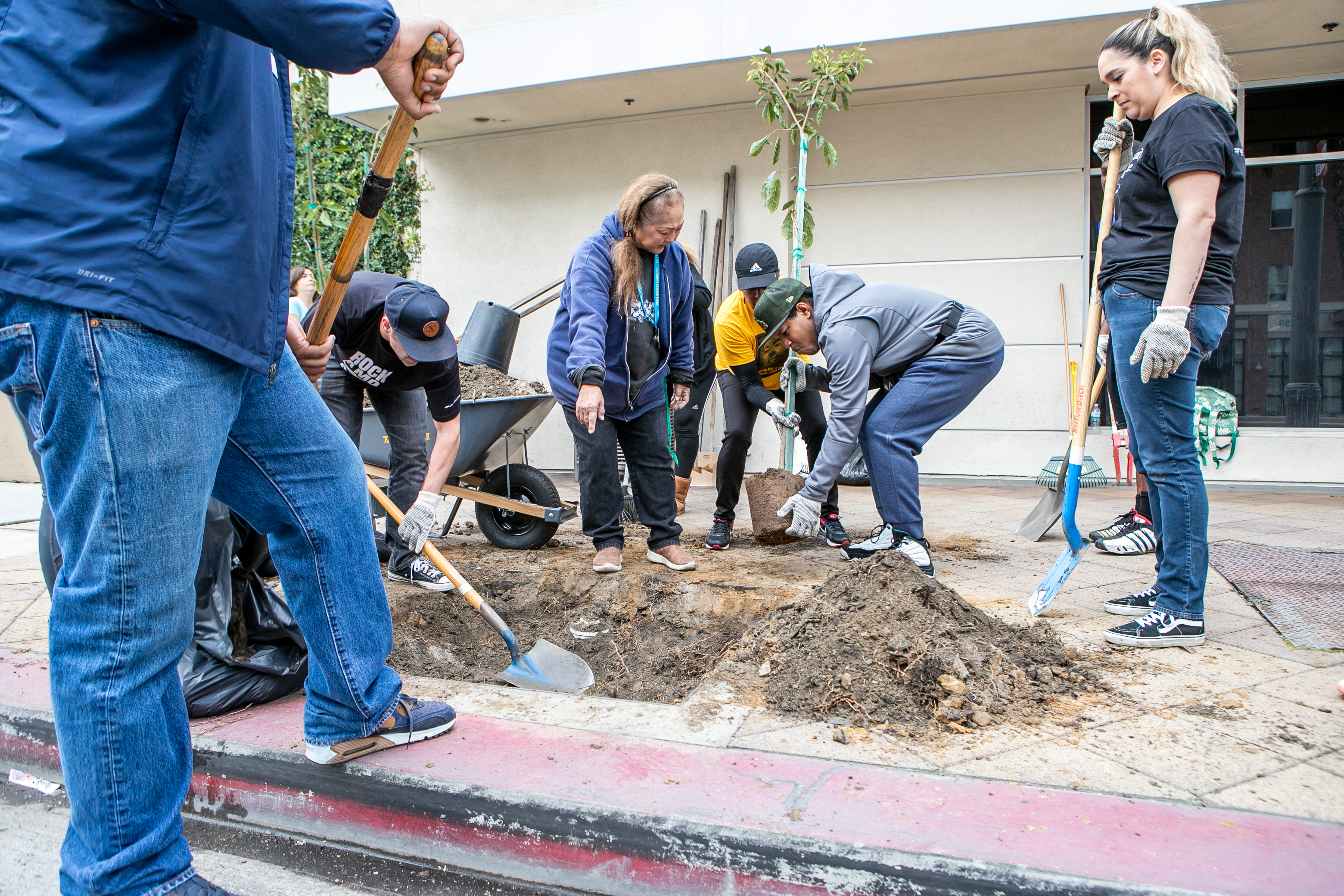 2020 MLK Day of Service | Tree Planting